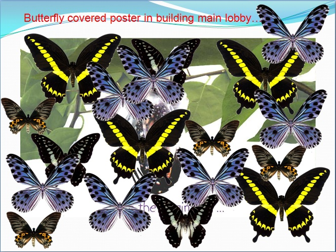 Story of  Butterfly: Aktivasi HR Transformation